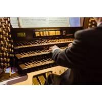 Organista Novara